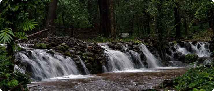 Bangalore to Agumbe Cabs